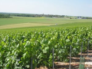 Vignoble de Changy